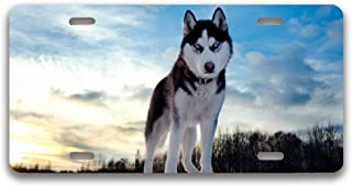 luckmx License Plate Frame Aluminum Metal Cool Siberian Husky License Plate License Tag Holder 4 Holes and Screws