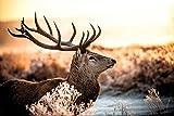 Poster Hirsch im Sonnenaufgang im Wald - Größe 61 x 91,5