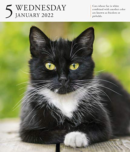 Cat Page-A-Day Gallery Calendar 2022: A Year of Protraits That Capture the Independence, Attitude, and Grace of 365 Felines.
