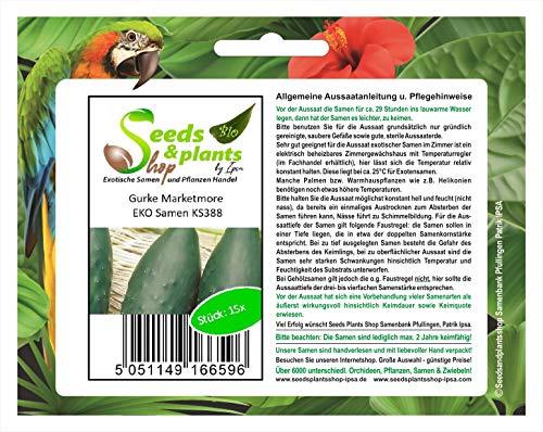 Stk - 15x Gurke Marketmore EKO - Gurken Samen Gemüse Garten KS388 - Seeds Plants Shop Samenbank Pfullingen Patrik Ipsa