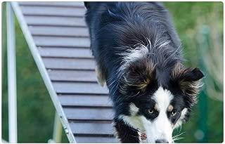 Indoor Floor Rug/Mat (23.6 x 15.7 Inch) - Agility Web Catwalk Training Dog Training 2