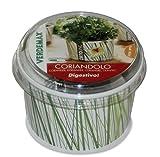 KORIANDER - Vaso para hierbas aromáticas