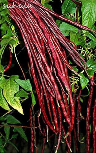 8 Pcs Multi Color haricots desserrées graine long des haricots semences Graines de plantes en pot poussent plus vite vivaces Fleurs Plant Garden 16