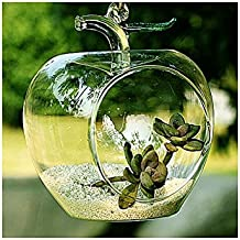 Apple Shaped Clear Glass Planter for Small Succulents, Air Plants or Rock Garden