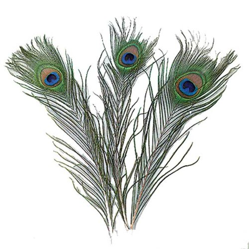 Efco Peacock 200-300 mm 5 pcs, Feathers, Green, 12 x 5 x 2 cm