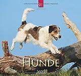 Hunde: Original Stürtz-Kalender 2020 - Mittelformat-Kalender 33 x 31 cm