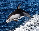 pintura diamante 5d paisajes Pintura diamante 5D Kit de pintura de diamante para manualidades DIY Pintura al oleo por numeros 40x50cm Nadar con delfines