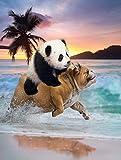 TSlook Super Soft Warm Blankets Sofa Bed Throw Blanket Funny Panda Riding Pug Dog Colourful 40 x 50 inch