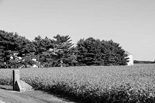 18 x 24 Black & White Canvas Wrap of A Soybean Field Ready for harvesting in Late Summer in Carroll County Indiana y55 2016 Highsmith
