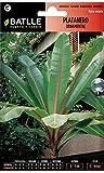 Semillas de Flores - Platanero Ornamental - Batlle