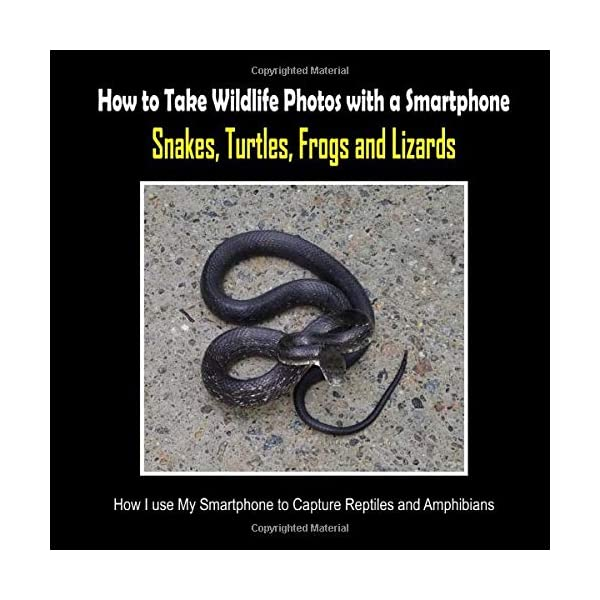 Snakes, Turtles, Frogs and Lizards: How I Use My Smartphone to Capture Reptiles and Amphibians (How to Take Wildlife Photos with a Smartphone)