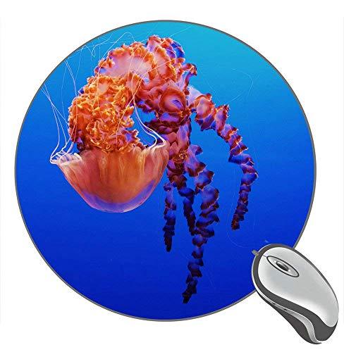 Quallen Monterey Bay Aquarium Kalifornien USA 11685 Hintergrund Desktop Gummi Rutschfest Gaming Runde Mauspad Mausmatte Mousepad