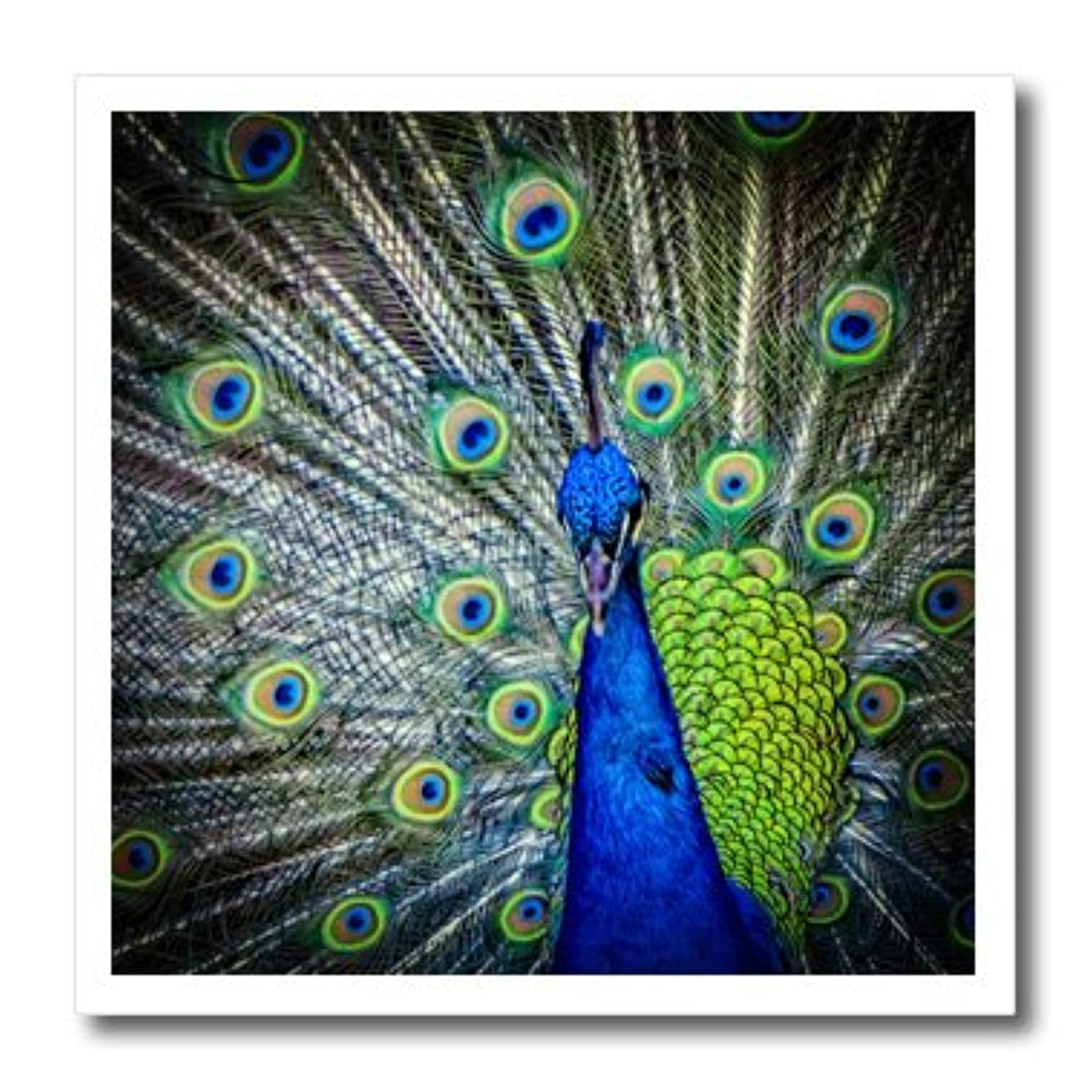 3dRose ht_127497_1 Magnificent Peacock Iron on Heat Transfer, 8 by 8-Inch, for White Material