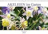 Akeleien im Garten (Wandkalender 2021 DIN A4 quer)