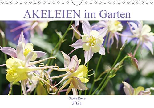 Akeleien im Garten (Wandkalender 2021...
