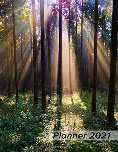 Planner 2021: Daily Weekly Monthly 1 Year Agenda Schedule Organizer - Forest Sunbeams - Christmas Gift for Women for Men for Nature Lovers