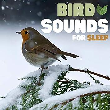 Bird Sounds For Sleep