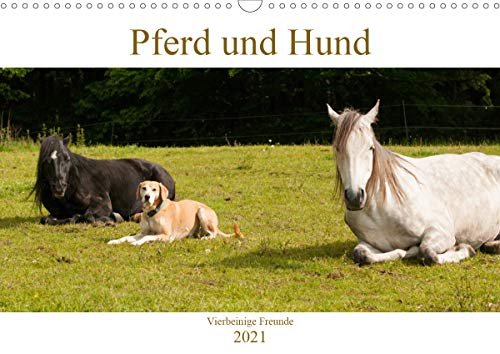 Pferd und Hund - Vierbeinige Freunde (Wandkalender 2021 DIN A3 quer)
