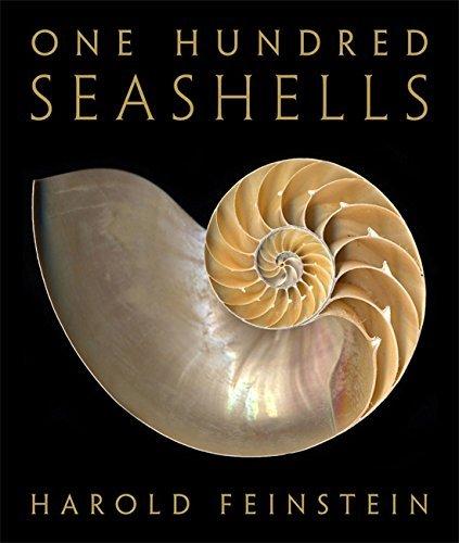 09 Seashell - 1