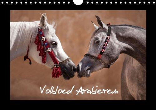 Volbloed Arabieren (B-Version) (Wandkalender 2014 DIN A4 vertikaal): De mooiste paarden uit het land van 1001 nacht. (Maandelijkse Kalender, 14 Pagina's)