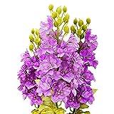 Charm4you Semillas de macetas de Flores,Semilla Floral de jardín al Aire Libre-0.5 kg,perennes Resistentes para balcón