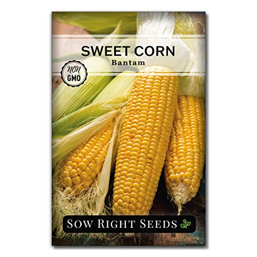 Sow Right Seeds - Bantam Sweet Corn Seed for Planting - Non-GMO Heirloom Packet with Instructions to Plant a Home Vegetable Garden