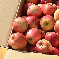 青森産家庭用葉とらず紅玉りんご10kg箱ごろごろ詰ジュース加工用極小約12kg約70-80個前後