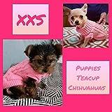 Pretty Pampered Mascotas XXS Rosa Talla 6 Chihuahua Cachorro Perro Abrigo Muy pequeño Extra pequeño pequeño