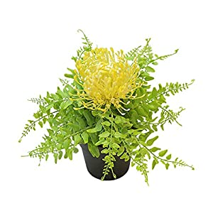 Potted Artificial Protea Flowers, Bonsai Stage Office Garden Wedding Home Party – Yellow