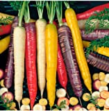 Tomasa Samenhaus- Bio Möhrensamen Gemüse Saatgut winterhart mehrjährig Möhrengemüse Gemüsesamen Samenmischung Bunte Möhren Harlekin F1 süßer Geschmack