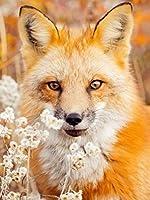 ダイヤモンドの絵画 5Dダイヤモンド絵画クロスステッチ動物ダイヤモンド刺繡フォックスフルスクエアラインストーン写真家の装飾