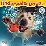Underwater Dogs 2020 7 x 7 Inch Monthly Mini Wall Calendar, Pet Humor Puppy