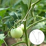Matogle 200 PCS Gancio per Pomodori Supporto per Piante Verdura Pomodoro Prevenire Frutto ...