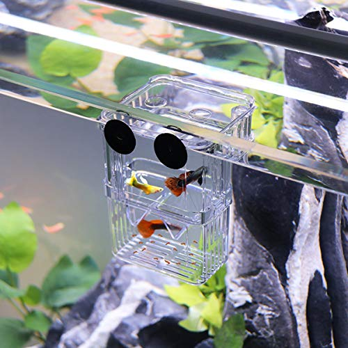 WEAVERBIRD Aquarium Fisch Isolation Box Acryl Transparent Hatchery Inkubator mit 2 Saugnapf für Aquarium Tank Züchter