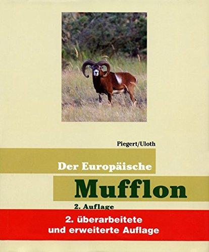 Der Europäische Mufflon