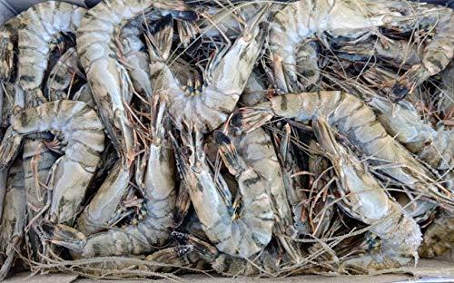 鮮度抜群 聖なる海老 1kg×10箱 箱51-60匹 ブラックタイガー 天使の海老 限定品 大特価
