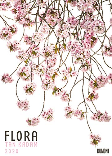 Flora 2020 – Blumen-Kalender von DUMONT– Foto-Kunst – Poster-Format 49,5 x 68,5 cm - Partnerlink