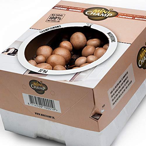 Pilze Züchten Set | Agaricus bisporus var. avellaneus | Champignons braun | Selbst Züchten | Pflanzen Gemüse | Zucht Box 7,5L