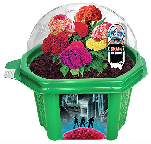 Grow Your Own Zombie Brains - Complete Kids Terrarium Kit to Grow Plants That Look Like Real Brains - Includes Everything Needed to Start Attracting Zombies