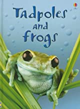 Tadpoles and Frogs (Beginners Nature, Level 1)