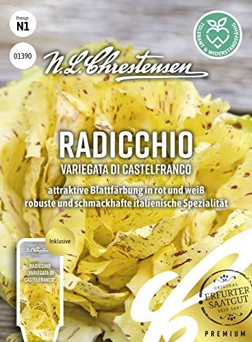 Radicchio Variegata di Castelfranco, attraktive Blattfärbung in rot und weiß, Samen