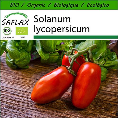 - 10 Semillas Tomates Lycopersicon esculentum San Marzano Tropica San Marzano Tomate
