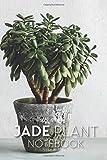Jade Plant Notebook: Crassula Ovata Tree Journal For Writing Journaling