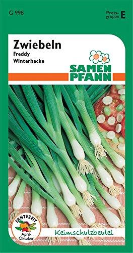 Samen Pfann G998 Zwiebel Winterhecke Freddy (Zwiebelsamen)