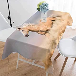 Horses Rectangular tablecloths in a variety of colors and sizes Palomino Horse in Sand Desert with Long Blond Male Hair Power Wild Animal Can be used for parties W54 x L84 Inch Purple Grey Peach