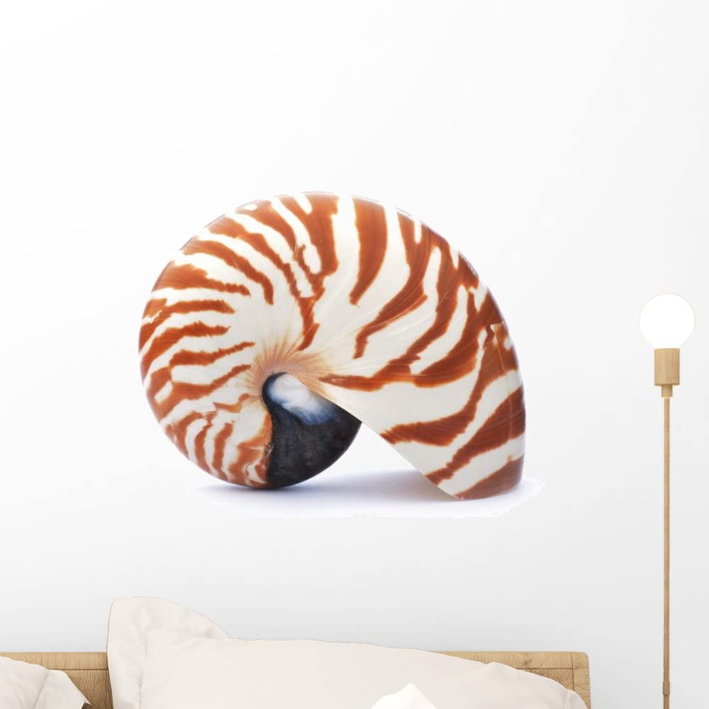 Wallmonkeys Wm85727 Nautilus Shell Isolated On White Background Peel And Stick Wall Decals 72 In W X 48 In H Colossal Home Kitchen