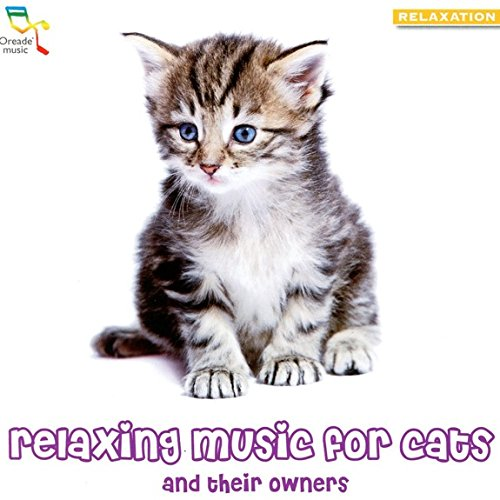 Relaxing Music For Cats And Their Owners