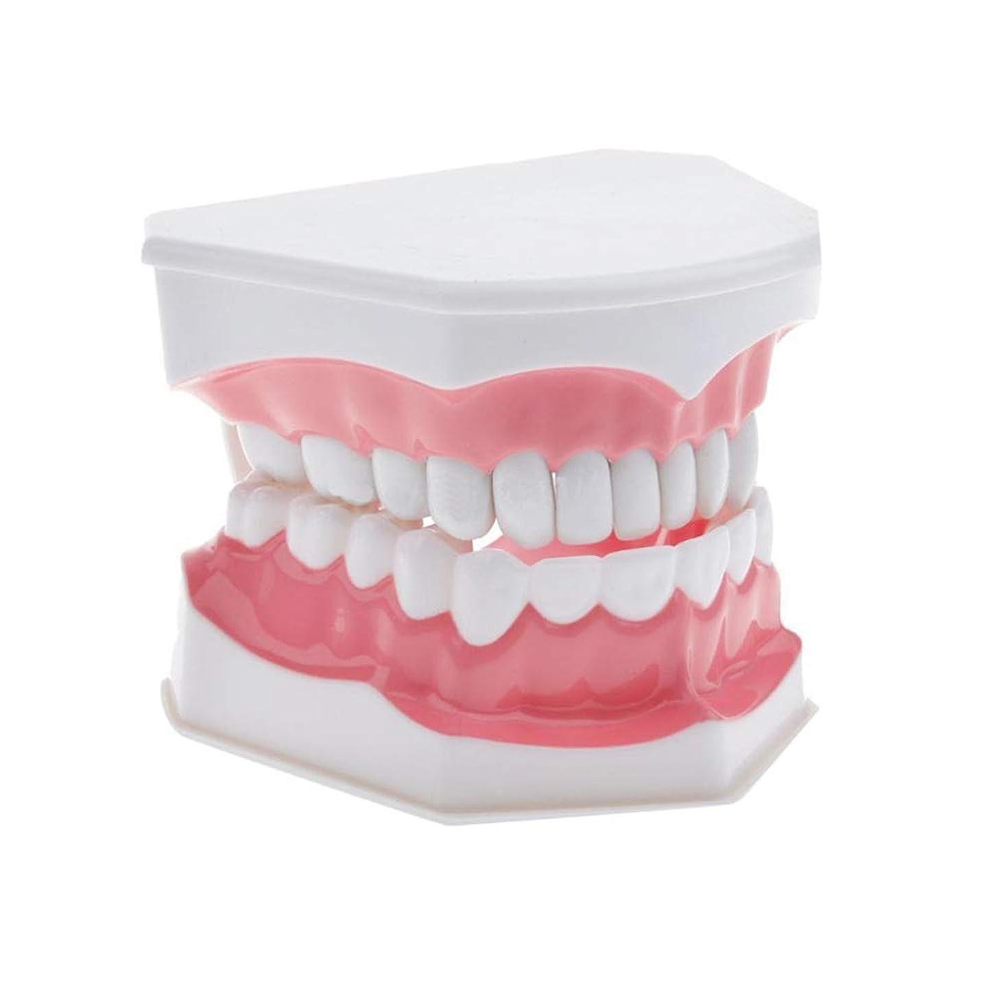スーダンサラダ部SUPVOX デンタルモデルブラッシングフロッシング練習歯typodontモデル歯肉可視解剖学的デモンストレーション教育勉強