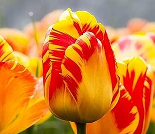 Amazon.es: Ayodhya.UK99 - Jardinería: Jardín