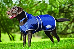 Black Labrador wearing a blue Weatherbeeta Dog Raincoat.